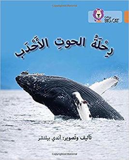 رحلة الحوت الاحدب