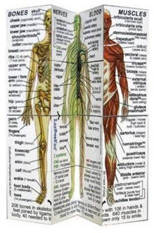 Picture of ZooBooKoo Human Body Systems and Statistics Cube Book