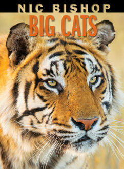 Picture of Nic Bishop Big Cats