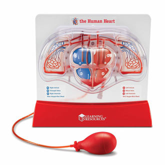 Picture of Learning Resources Pumping Heart Model, Teaching aid