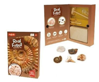 Picture of Fossil Dig kit