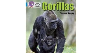 Picture of Gorillas
