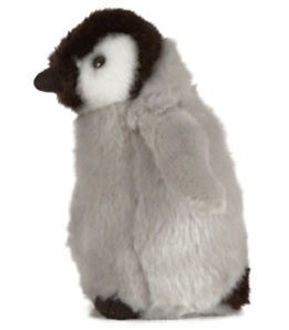 Picture of Penguin Chick