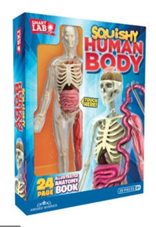 Picture of Squishy Human Body 21 removable Body Parts