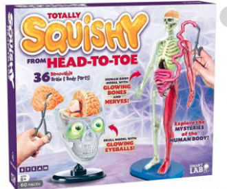 Picture of Totally Squishy from Head to Toe 36 removable brain Body Parts