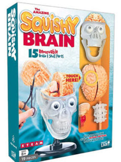 Picture of The Amazing Squishy Brain 15 removable Brain Skull parts