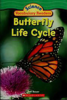 Picture of Buterfly life cycle